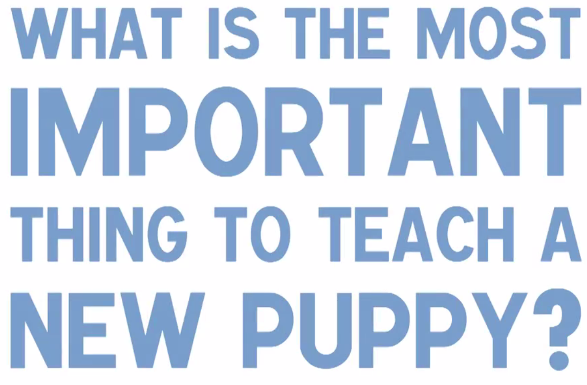 The improtance of socialization in new puppies