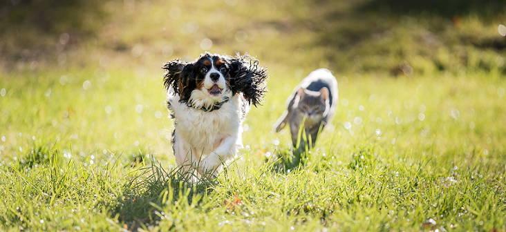 Dog and cat running in a field